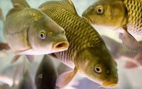 Запрет на рыбную ловлю в ПМР
