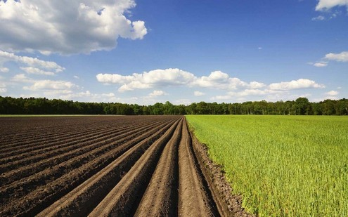 Выведение сортов пшеницы